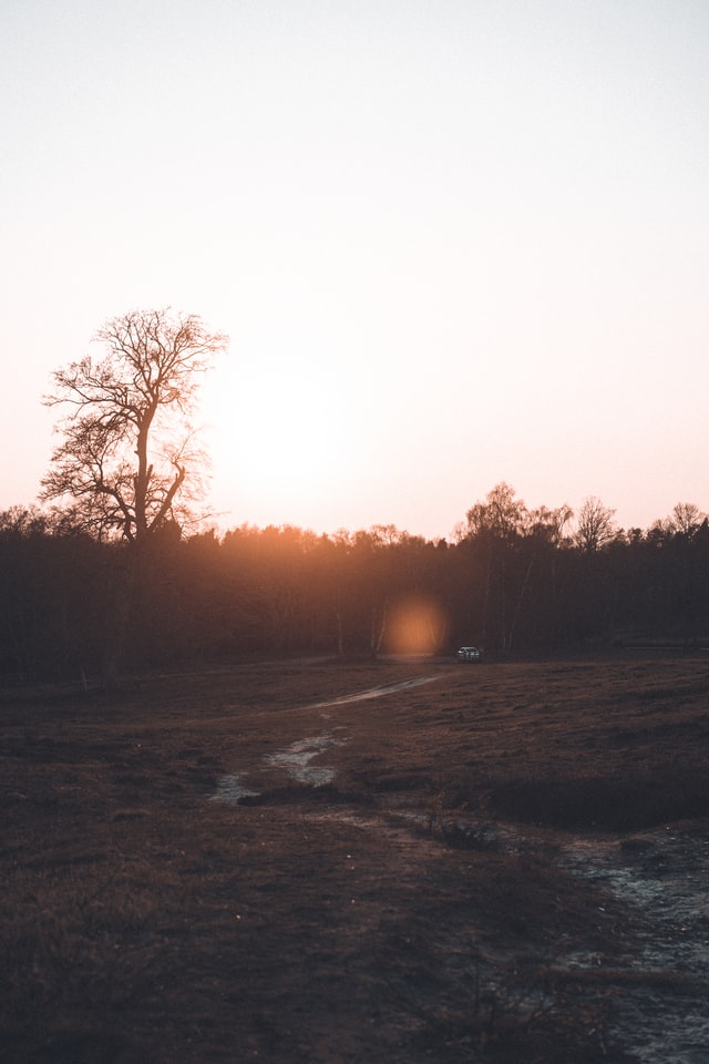 Promenade équestre en forêt.